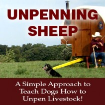 Unpenning Sheep