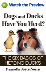 The Six Basics of Herding Ducks